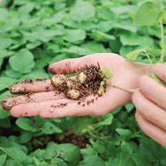 最新manbetx客户端下载访谈 | 把巫溪的农产品带出大山,做成最新manbetx客户端下载 - 薯光农业最新manbetx客户端下载战略合作访谈